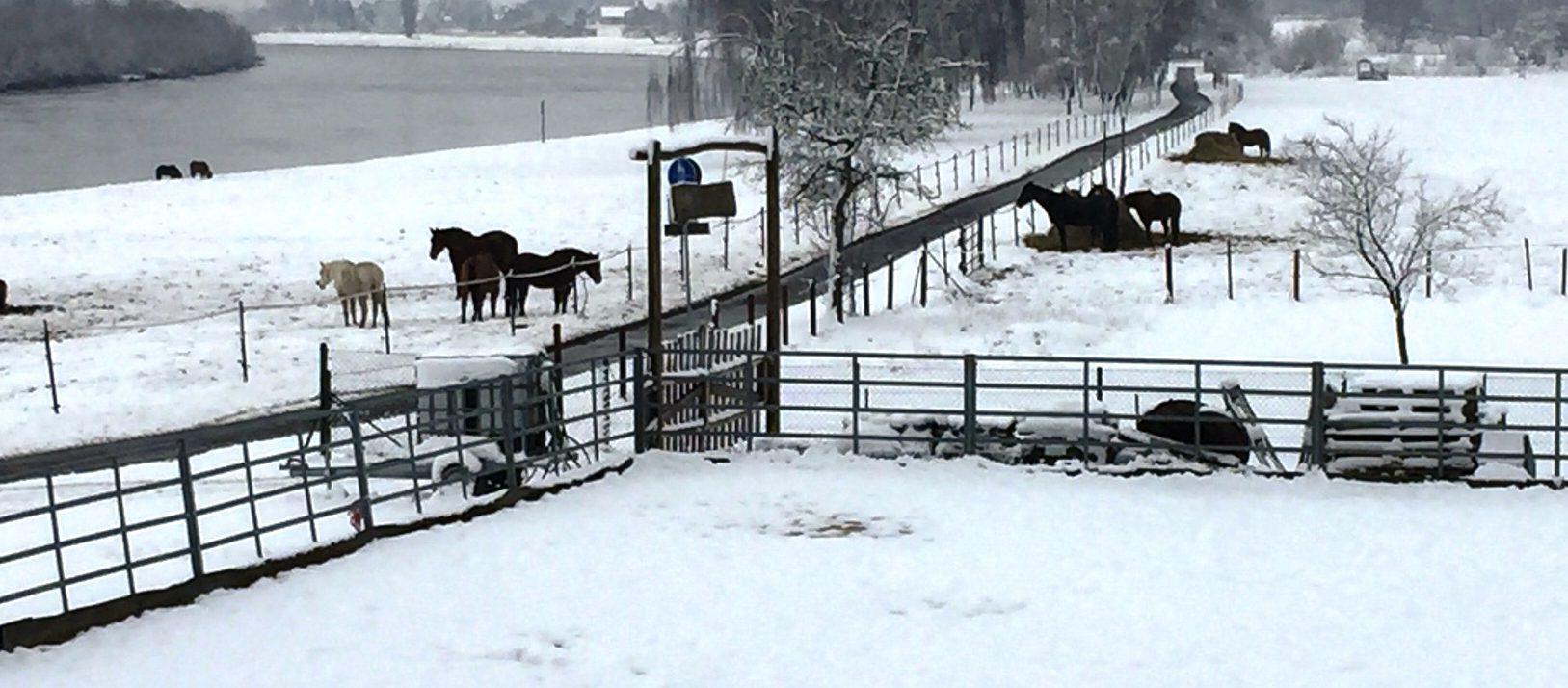 Winter auf den Pferdekoppeln